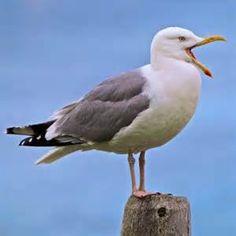 Cute Seagull In Photos Clay Birds, Pet Birds, Ocean Projects, Photo Animaliere, Sea Crafts, Bird Artwork, Shorebirds, Nautical Art, Bird Pictures