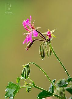 21-7-Photography-Tips-For-Beginners-by-Prathap-Photography-Nature-Phootography-Simplified.jpg