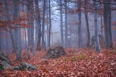 the mist is falling in the forest by xamad #nature #mothernature #travel #traveling #vacation #visiting #trip #holiday #tourism #tourist #photooftheday #amazing #picoftheday