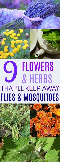 These 9 Plants Are So AMAZING At Getting Rid of Pests! I love that there are flowers and herbs!