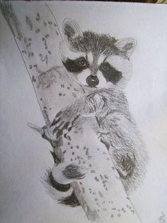 Raccoon Portrait Pencil Sketch 9 x 12 U Provide by pigatopia, $100.00