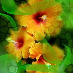 Breeze of Hawai