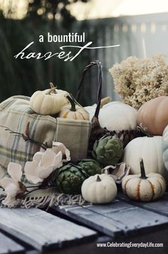 Fantasy Pumpkins, green artichokes, Celebrating Everyday Life with Jennifer Carroll