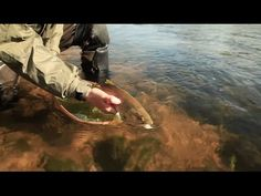 Traditional French Style Nymphing Masterclass - Hardy Fly Fishing - YouTube