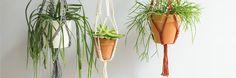 IWWI - Suspensions pour plantes en macramé Iwwi