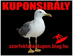 szorf_kolcsonzes_siofok.jpg
