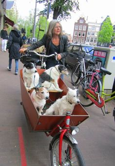 Year 2016 Dog going out with the 'bakfiets' to the parc. Amsterdam