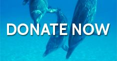 Take Action: Stop the Slaughter Petition | SaveJapanDolphins.org - Please sign & share