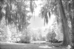 """Backyard Fantasy"", Photo by Harriet Blum.   I shot this photo at Rosedown Plantation in St. Francisville, LA, looking out the back door.  I used black and white infrared film for the dreamy effect."