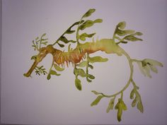 Watercolour Leafy Sea Dragon