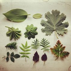 Collection of Leaves Instagram photo by @camorran (Camilla Engman) | Beautiful Beautiful Beautiful.