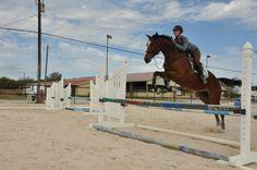 My lovely cat-horse, Pharoah