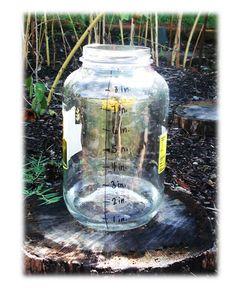 rain gauges-great when doing a weather unit
