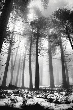 Black & White trees x