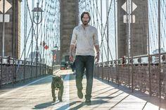 'John Wick': Chapter Two': Keanu Reeves tiene un nuevo perro en las últimas imágenes de la película - Noticias de cine - SensaCine.com