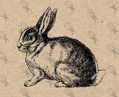 Vintage Illustration, Ink Illustrations, Rabbit Illustration, Grabar Metal, Wall Art Prints, Fine Art Prints, Collages, Rabbit Drawing, Rabbit Pictures