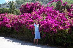 Potted Bougainvillea Care | ... the-sun.com/images/Blog/apr_2005_blog/jane_forster_bougainvillea_1.jpg