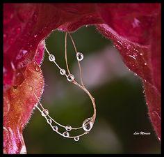 the secret of flower
