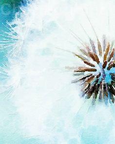 Blue Dandelion:  A Watercolor Fine Art Print by ChezLorraines