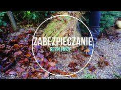 Zabezpieczanie traw ozdobnych na zimę, jak ciąć hortensje - YouTube Youtube