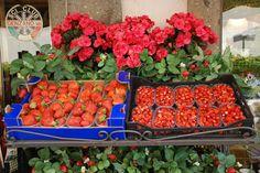 Exhibition of strawberries in Nemi (Rome)