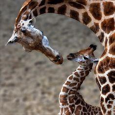 for my savanna :)