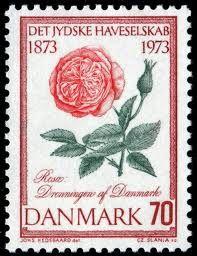 Danish rose stamp,,,beautiful old one,,,love it