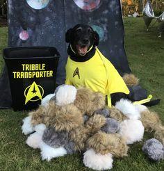Star Trek Halloween dog costume. #parkforesthalloween Dog Halloween Costumes, Dog Costumes, Halloween Art, Halloween Themes, Funny Stuff, Cool Stuff, Dog Quotes, Star Trek, Snoopy