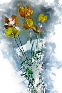 Watercolour treatment; poppies from the garden.