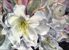 Rhododendron1 Linda Forsberg