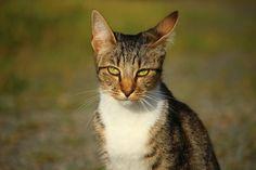 Funny cat (1 pic)