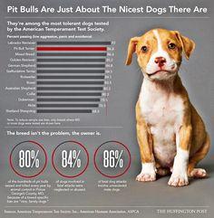Pit bulls deserve better!... WAY better.