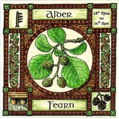 Alder, Ogham name Fearn, rules 18th March to 14th April and is sacred to Bran. When Bran the Blessed, giant king of ancient Welsh legend, set out to rescue his sister Branwen from Ireland, he laid himself down for his men to use as a bridge to cross the sea. Alder piles are still used as foundations for bridges, as the oily wood does not rot in water.