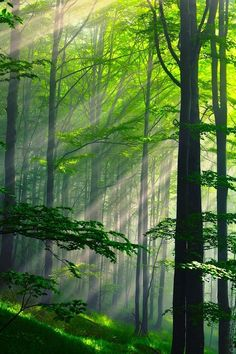 "Summer Forest, Bulgaria. My BFF calls these ""God rays."" I like the idea that we are being touched by the divine in these places. www.dogwoodalliance.org"