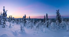 Polar Night at Finnish Lapland, Finland. By Mikko Lönnberg.  - #funny #lol #viralvids #funnypics #EarthPorn more at: http://www.smellifish.com