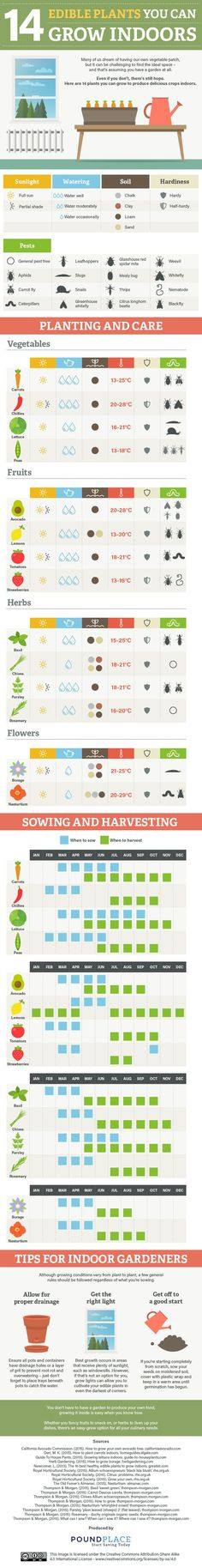 Indoor Vegetable Gardening 14 Edible Plants You Can Grow Indoors - No space for a garden? Try indoor gardening! These Indoor Gardening Infographics aim to inspire indoor gardening. Indoor Gardening tips