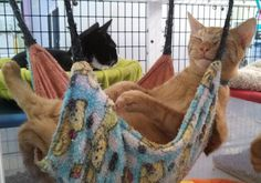 DIY Cat Project: Make a Kitty Hammock!
