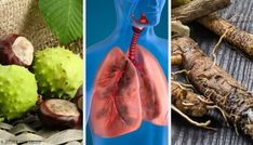 Try These 4 Homemade Remedies to Breathe Better and Strengthen Your Lungs Feuille Eucalyptus, Home Treatment, Tikal, Herbal Medicine, Lunges, Herbalism, Essential Oils, Health Fitness, Herbs
