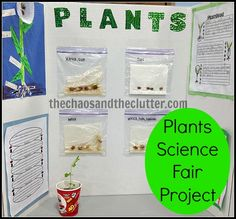 29 Trendy Science Fair Projects Biology Plants - Life and hacks Plant Science Fair Projects, Science Fair Board, Plant Projects, Science Activities For Kids, Easy Science, Stem Activities, Life Science, Elementary Science, Science Education