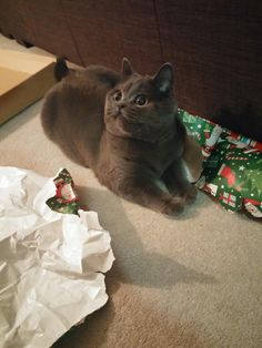 Impossible to wrap with this little guy