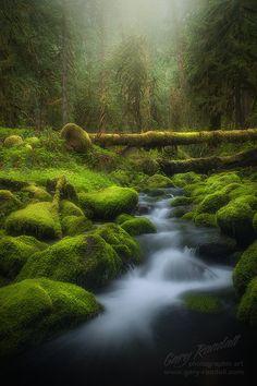 A Still Creek   (Source: Flickr / rowdey)