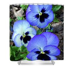 Pansies 0823 Shower Curtain By Guy Whiteley