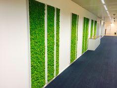 Het voordeel van deze plantenwand is dat hij geen water, licht of specifieke temperatuur nodig heeft. Moss Fashion, Curtains, Wall, Home Decor, Ideas, Living Room, Blinds, Walls, Interior Design