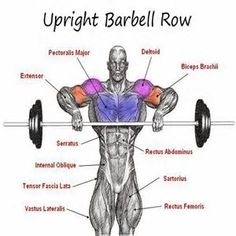Image result for Upright Row Anatomy