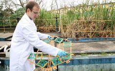 Em vez de máquinas, plantas tratam esgoto: Em Novo Hamburgo/RS está sendo testada uma tecnologia para tratamento de esgoto que utiliza plantas e pode...