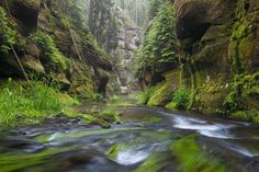 Kirnitzsch river gorge - After rainfalls in the deep Kirnitzsch river…