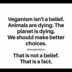 veganism eco-friendly ethical cruelty-free healthy