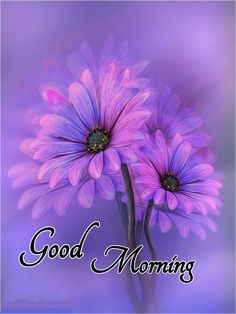 Good Morning Thursday Images, Good Morning Gift, Good Morning Greetings, Good Morning Quotes, Good Morning Beautiful Flowers, Good Afternoon, Silhouette Art, Good Thoughts, Happy Day