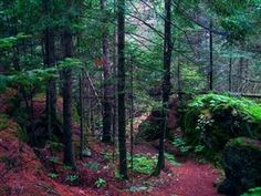 Magical, The North Woods, Wisconsin  Photo via Hally