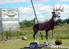 Deer Statue: Address: Deer Creek, MN Directions: In a roadside park at the intersection of state highway 106 and state highway 29.